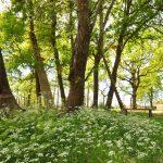 Le parc Aventures Sud Gironde